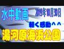 水中動画(2019年10月30日)in 湯河原海浜公園