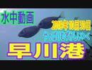 水中動画(2019年10月30日)in 早川港