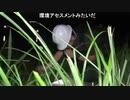 【後援会アーカイブ】危険映像!夜のタウナギ釣り