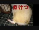 モル日常動画➀