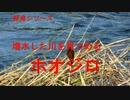 野鳥シリーズ 増水した川を見つめる ホオジロ