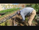新潟に行ったら、おじいちゃんの畑で収穫したショウガをもらった件