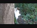 野良猫が木の上に逃げようとしたが失敗した結果⇒やけくその爪とぎ