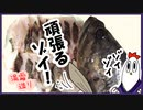 【NWTR料理研究所】〇〇〇〇の湯霜造り+おまけ【評価☆4】