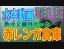 水中動画(2019年11月30日)in赤レンガ倉庫