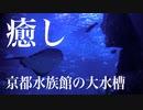 癒しの映像・美しい京都水族館の大水槽