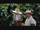 どのようなコーヒー豆は、収集に良い娘を教育の父  アセアンファーム合同会社
