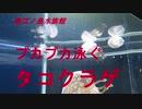 新江ノ島水族館 プカプカ泳ぐタコクラゲ