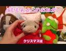 かわええ!ぶたたんのクリスマスインスタ映え講座【ぴんくのぶたチャンネル】