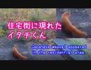 イタチくん、現る!(`・ω・´) 2019/12/09【Japanese weasel appeared !】