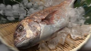 【握ってみた】白身の大様!鯛のお刺身握り寿司の盛り合わせ!