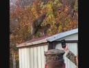 ホモと見る交尾を撮影されて激怒するニホンザル