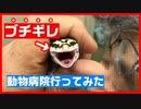【いくらかかる⁉】繁殖したレオパ(ヒョウモントカゲモドキ)の赤ちゃんを動物病院に連れて行った