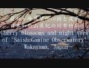 桜と夜景 最初ヶ峰展望所 和歌山県紀の川市竹房