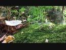 [東方二次創作] フォールオブフォール~秋めく滝を見に行く~