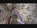 (普通に雑談回)変態忍者の、狩猟&有害鳥獣駆除従事活動記・その93