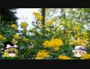 【ゆっくり】ソロ充が行く!! スイス絶景ソロ紀行 part10 ~丘の上のバラ園 ~