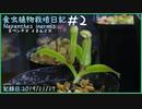 食虫植物栽培日記 Nepenthes inermis#2《ウツボカズラ》