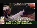 【水底計画】part5「ブラントノーズガー 成長報告」