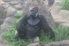 落ち着かないモンタさん(千葉市動物公園)