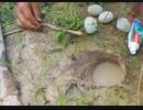【魚】卵と歯磨き粉を使った漁【田んぼ】