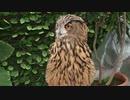 「掛川花鳥園」の鳥の詰め合わせ動画