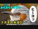 0114【コガモの水浴び】ユリカモメやヒヨドリ✨【今日撮り野鳥動画まとめ】生き物語