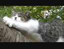 暇すぎる野良猫のルーティンを追ってみた結果