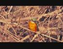 □20100115□の鳥さん