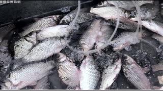 ディーゼル燃料入り魚