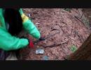 (くくりわな検証回)変態忍者の、狩猟&有害鳥獣駆除従事活動記・その95