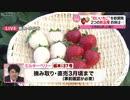 栃木県が開発…2つの新品種イチゴ 小山市