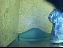 【うたスキ動画】メルシー/神様、僕は気づいてしまった を歌ってみた【ぽむっち】