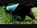 【脱走だーッ!2】黒猫キキくん