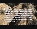 秘密な「しずく」の2020年運勢!!誕生月別タロット占い