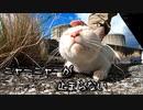 猫にちゅ~る与えて御目目拭き拭き作戦