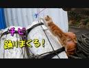野良猫おチビ、初猫じゃらし