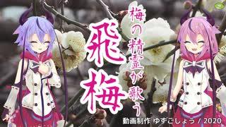 【鳴花ヒメ・ミコト】飛梅(さだまさし)【VOCALOIDカバー】