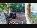 食堂の野良猫 2020-02-09