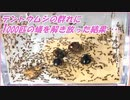 テントウムシの群れにアリを解き放ったら凄まじい戦いになった。