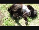 【こうしてこうして遊ぶんだーッ!2】黒猫キキくん