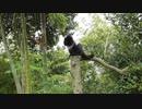 【こうしてこうして遊ぶんだーッ!3】黒猫キキくん