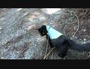 【脱走だーッ!19】黒猫キキくん