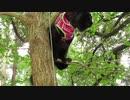 【発見!ターザン猫だーッ!】黒猫キキくん