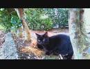食堂の野良猫 2020-02-22