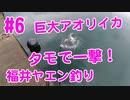 【#6 イカ釣り動画】巨大アオリイカを一撃で!ヤエン釣り遠征!