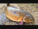 【釣り・Fishing】上板橋・志村坂上付近の見次公園で鯉釣り@今までで一番大きな鯉!【VLOG・iPhone XS・рыбалка на карпа】