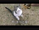 【解説!】猫パンチで魚をとる猫
