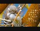 今日撮りの野鳥さん達まとめ2月26日霧雨