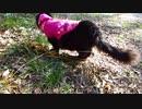 【脱走だーッ!29】黒猫キキくん